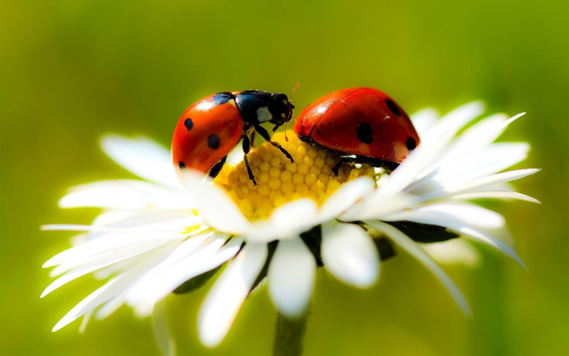 Фото божья коровка коробочка бабочка