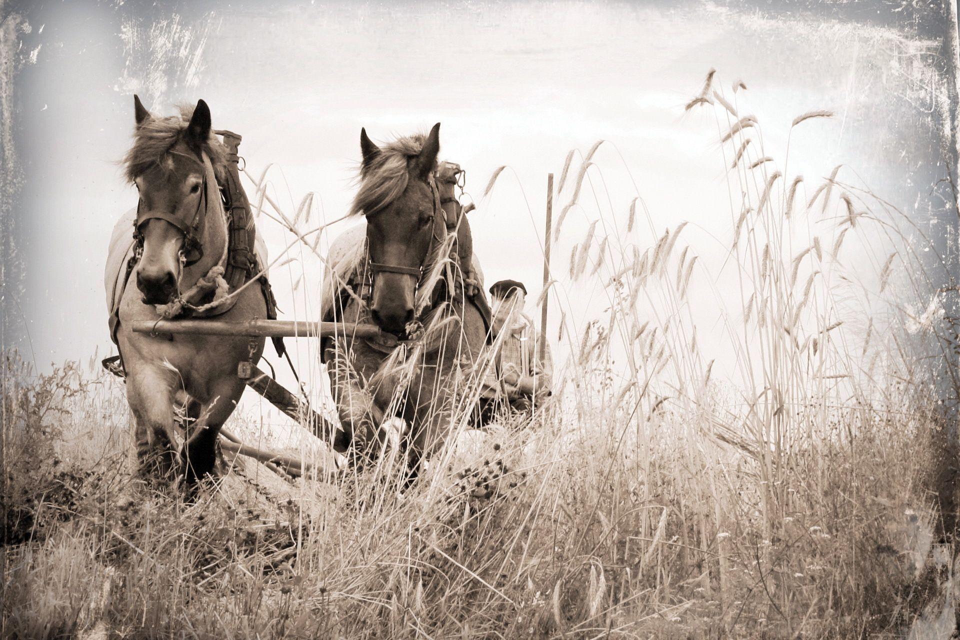 Заставки картинки лошади обои лошади