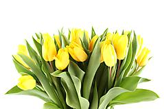 Обои желтые тюльпаны скачать на рабочий стол, фото букет цветов