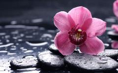 Картинки цветы орхидея скачать для рабочего стола, заставки цветок