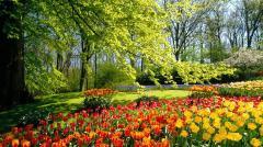 Картинки тюльпаны скачать на рабочий стол, заставки цветы желтые