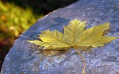 Картинки лист скачать на рабочий стол, фото осень