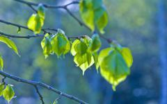 Картинки весенняя природа скачать для рабочего стола, фотографии весна