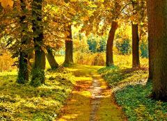 Картинки осенний лес скачать на рабочий стол, фото желтые листья