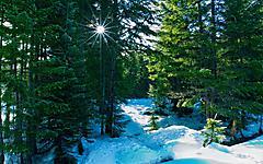Картинки елки зимой скачать для рабочего стола, заставки в лесу