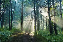 Обои деревья скачать для рабочего стола, заставки лучи солнца