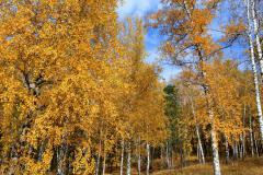 Картинки осень скачать на рабочий стол, фото Россия