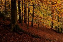Картинки лес скачать на рабочий стол, заставки деревья