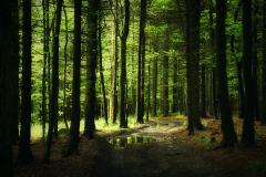 Обои густая местность скачать на рабочий стол, заставки зеленый лес
