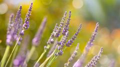 Картинки full hd природа скачать на рабочий стол, заставки весна