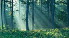 Обои Природа скачать для рабочего стола, фотографии лес