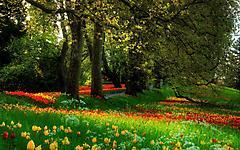 Обои красивый парк скачать на рабочий стол, заставки растут цветы
