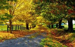 Картинки золотая пора скачать на рабочий стол, заставки желтые листья