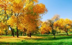 Картинки осенний лес скачать на рабочий стол, фотографии осень