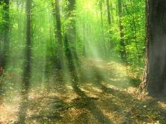 Картинки зеленый лес скачать на рабочий стол, заставки лесная тропа