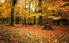Обои деревянные столики скачать для рабочего стола, фото желтые листья