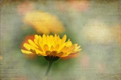 Картинки цветок скачать для рабочего стола, заставки лето