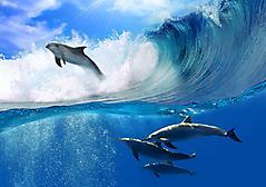 Обои дельфины прыгают скачать на рабочий стол, фотографии на волнах