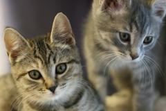 Обои животные скачать для рабочего стола, фотографии котята