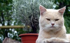 Картинки кошка скачать на рабочий стол, заставки взгляд
